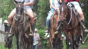 Horseback het Berijden, Paarden, Dieren stock videobeelden