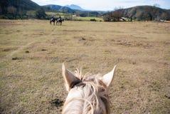 Horseback jazda Obrazy Royalty Free