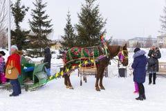 Horseback jazda w saniu Wakacje Maslenitsa Siber Zdjęcie Stock