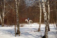 horseback jazda w zima parku Zdjęcie Stock