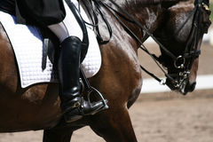 horseback jeździec Obrazy Stock