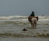 Horseback pescador 3 do camarão Fotografia de Stock