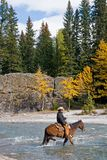 Horseback Rider. Cowboy on his horse crossing a river in the rockies in Canada Royalty Free Stock Photo