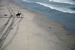 Horseback Rider. Rider on horseback heads to the surf with his dogs Stock Photography