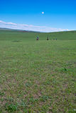 Horseback riders in grassland stock photo