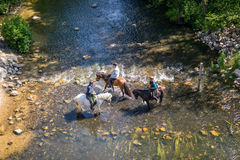 Horseback riders trying to cross a creek. VESTBIRK, DENMARK - JULY 16 - 2015: Horseback riders trying to cross the river at the rediscovered bridge in Vestbirk Royalty Free Stock Photos