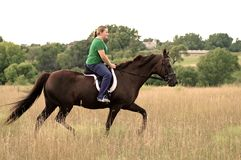 Horseback riding. Teen girl riding Morgan horse in field royalty free stock photos