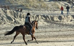 Horseback riding on the beach stock photo