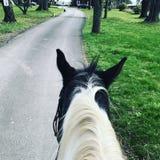 Horseback riding. Down a road Stock Photo