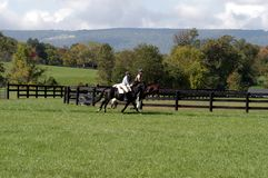 Horseback Riding in Franklin, Tennessee. Equestrian Horse ranches are very poplar  in Middle Tennessee.  The term Equestrian refers to the skill of riding Stock Photo