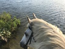 Horseback Riding by the lake in Pennsylvania. Poe is looking at Stock Photography