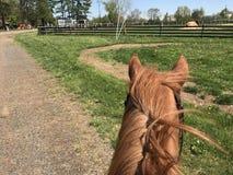 Horseback riding. A lovely day for horseback riding Stock Photos
