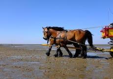 Horseback riding on the mudflat Royalty Free Stock Photos