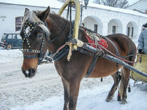 Horseback riding in Russia. Stock Photography