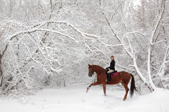 Horseback riding in scenic winter snowfall Royalty Free Stock Image
