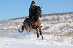 Horseback riding in winter. Field royalty free stock photo