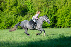 Horseback riding. Woman riding a horse in summertime outdoors. Human on horse runs fast in field. Royalty Free Stock Images