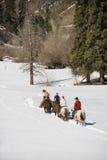 Horseback van de groep het berijden. royalty-vrije stock fotografie