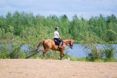 Horseback van het meisje op sprongen stock afbeeldingen