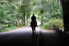 Horsebackriding na cidade Fotos de Stock