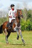 Horsebak de la mujer en el galope del caballo marrón de la castaña Imágenes de archivo libres de regalías