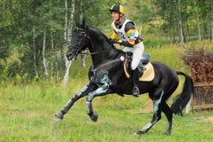 Horsebak del hombre en el galope del caballo negro de la castaña Imagenes de archivo
