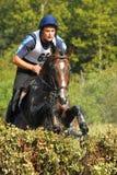 Horsebak del hombre en el salto del caballo marrón de la castaña Foto de archivo