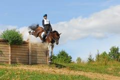 Horsebak do homem em saltar o cavalo vermelho da castanha Imagem de Stock