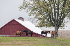 Horsebarn och hästar Royaltyfri Foto