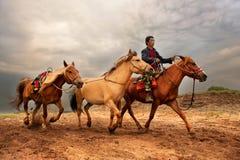 horsebreaker стоковое фото rf