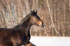Horsecloseup Lizenzfreie Stockbilder