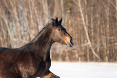 Horsecloseup Royalty Free Stock Images