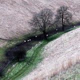Horsedale Yorkshire do leste Inglaterra Fotos de Stock Royalty Free