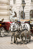 Horsedrawn carriage Stock Photography