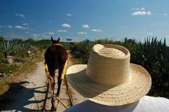 Horsedrawn spårvagn/Merida, Mexico Royaltyfria Foton