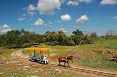 Horsedrawn spårvagn/Merida, Mexico Fotografering för Bildbyråer