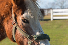 Horseface. Close-up of a horse's face focused on his eye Stock Photography
