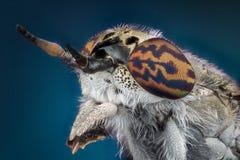 Horsefly macro photography Stock Photography
