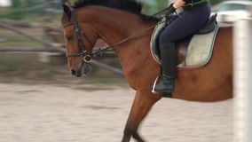 Horsegirl rides gallop on a brown horse in the outdoors sand arena. Competitive rider training dressage in manege