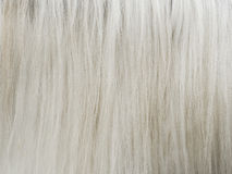 Horsehair Royalty Free Stock Photography