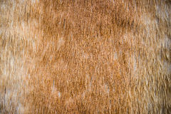 Horsehair texture and background Stock Image