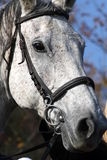 Horsehead. Detail of the white horsehead Stock Photos