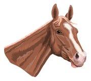 Horsehead Stock Photo