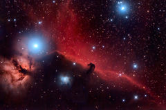 Horsehead Nebula. And Flaming Tree in the Constellation Orion royalty free stock photo