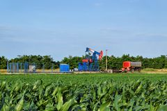 Horsehead oil pump in the middle of a corn farm Royalty Free Stock Photography