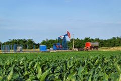 Horsehead oil pump in the middle of a corn farm Royalty Free Stock Photos