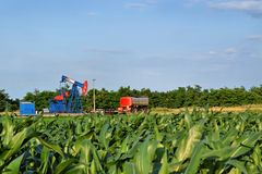 Horsehead oil pump in the middle of a corn farm Stock Images