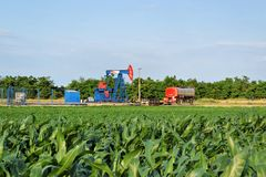 Horsehead oil pump in the middle of a corn farm stock photography