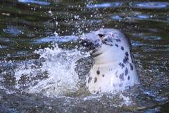 Horsehead sea Royalty Free Stock Photo