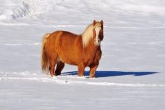 Horsein la neige aux Alpes de dolomites - Italie photo stock